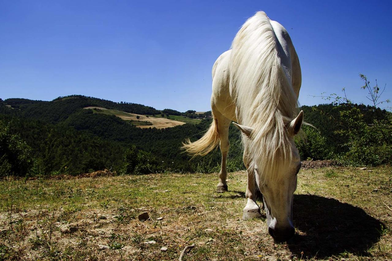 Corsi di equitazione - Valfabbrica (PG) - ,Umbria